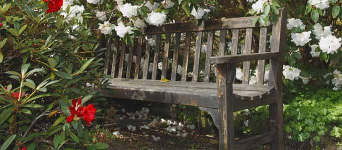 Mehr als 2500 Pflanzenarten kann der Besucher im Inverewe Garden zwischen Gairloch und Ullapool bestaunen