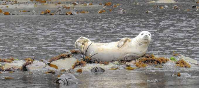 Bei den Glenapp Castle Sea Safaris erleben die Gäste die Natur hautnah