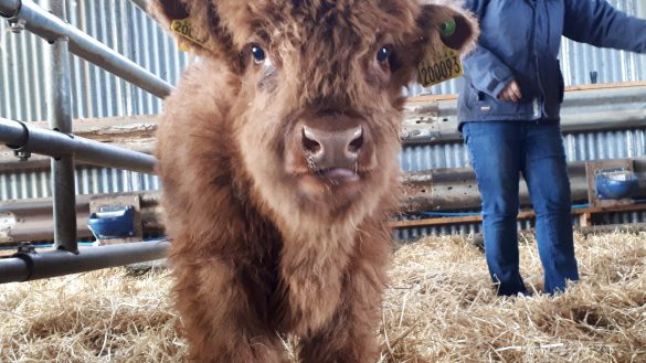 Grace Noble ist die Farmerin hinter Aberdeenshire Highland Cattle & Beef bei Banchory