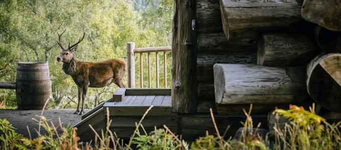 Bei den Eagle Brae Log Cabins bei Beauly handelt es sich um erstklassige Selbstversorger-Unterkünfte