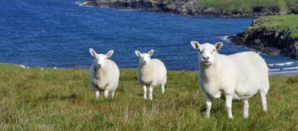 Der amüsant zu lesende Fettnäpfchenführer für Schottland aus dem Conbook Verlag