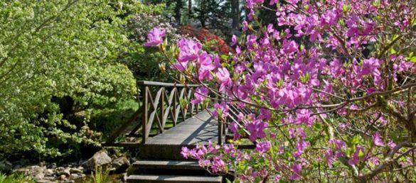 Crarae Garden liegt am Ufer vom Loch Fyne in der Grafschaft Argyll an der schottischen Westküste