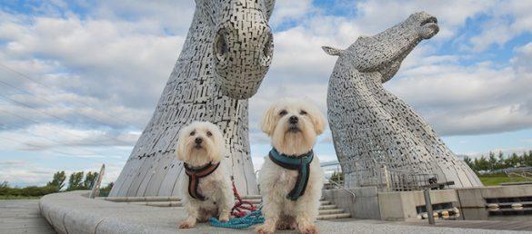 Paws on Board ist der Spezialist für Schottlandreisen mit Hund