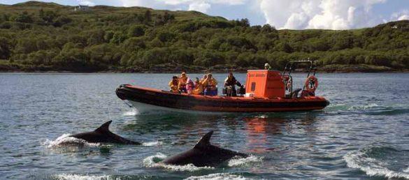 Die Seafari Adventures mit Sitz südlich von Oban bieten vielfältige Bootsausflüge vor der Westküste Schottlands an