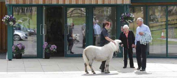 In dem Belwade Farm Rescue & Rehoming Centre in Royal Deeside treffen sich Tierliebhaber und Pferdefreunde