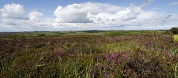 Hanna Pennig beschreibt ihr hübsches Städtchen Turriff als lokales Kleinod in Aberdeenshire