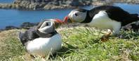 Der Veranstalter für Naturreisen »Speyside Wildlife« zeigt seinen Gästen die ganze Artenvielfalt in den Highlands