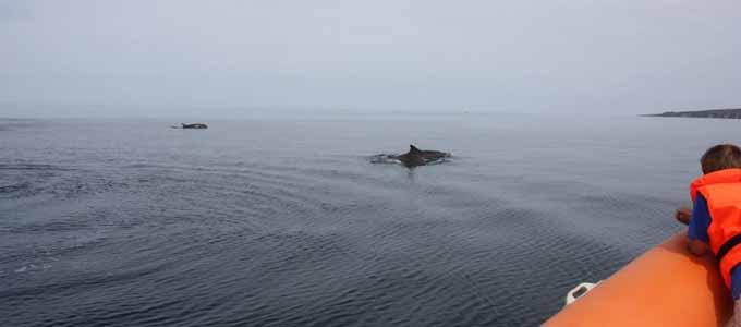 Mit den Bootsausflüge von North 58 kann man unvergessliche Abenteuer vor der Küste Morays erleben