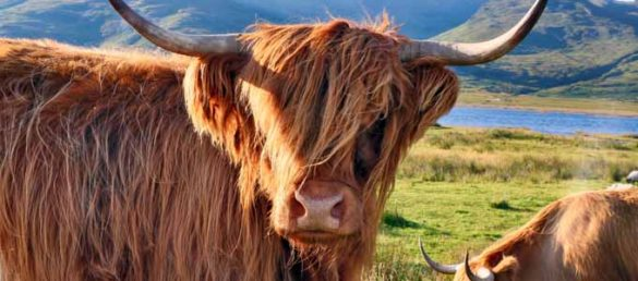 Mit dem Titel Schottensterben ist im Mai 2020 der zweite Hebriden-Krimi von Gordon Tyrie erschienen