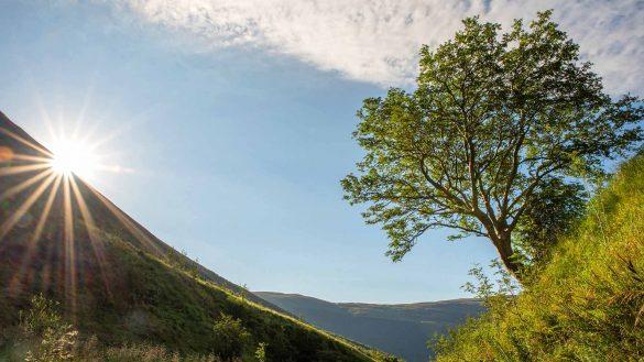 Der Survivor Tree im Carrifran Wildwood ist Schottlands Baum des Jahres 2020